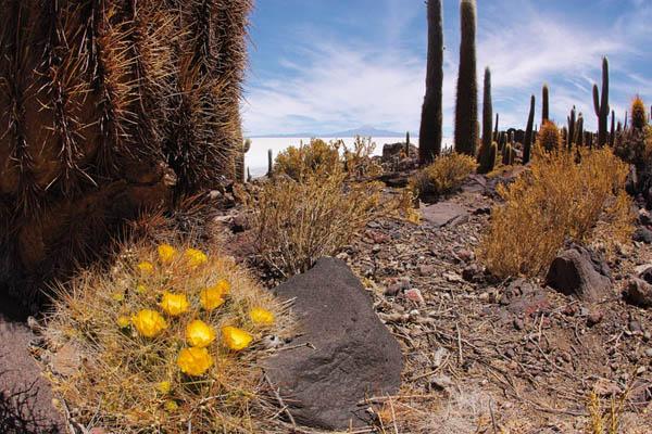 Названия цветущих кактусов и их фото.