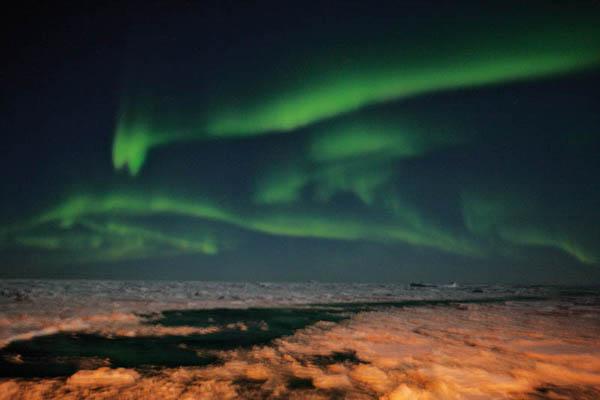 Фотографии материка Антарктида, животный и растительный мир.