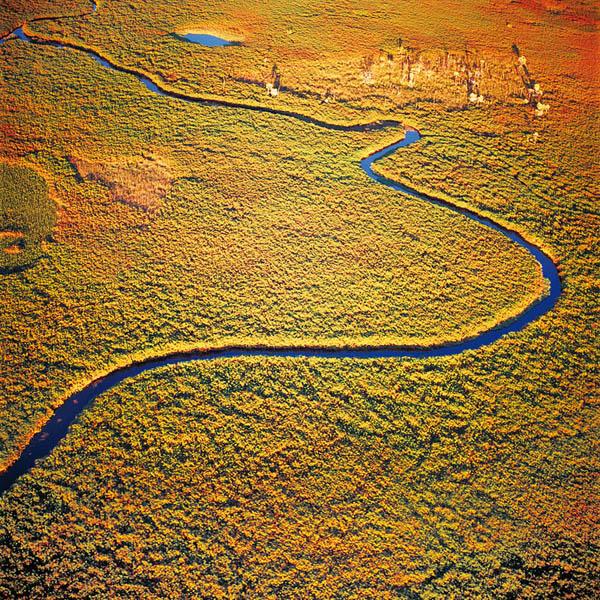 Ботсвана. Река Окаванго-Животный и растительный мир Африки в фото.