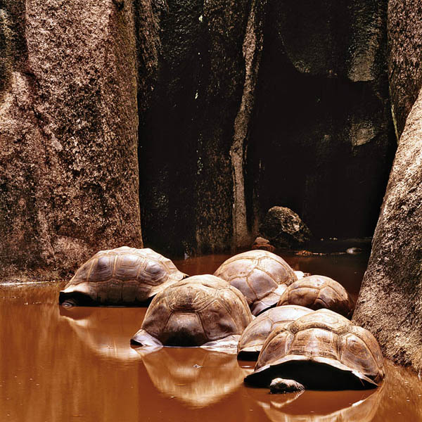 Гигантские черепахи. Животный и растительный мир Африки в фото.