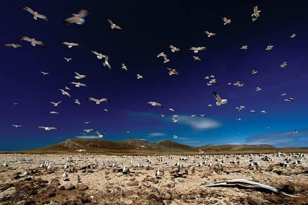 «Пейзаж» Ondrej Prosicky, Чехия, «Золотая камера – 2011»