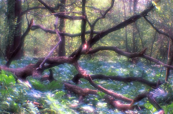 Игорь Новиков: Страж волшебного леса