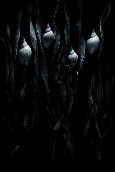Руслан Нургалиев - профессиональный фотограф. Воспринимает фотографию не просто как страстное хобби, а как окно в другой мир.